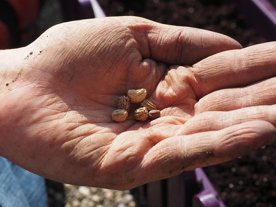 seeds-1117850_960_720